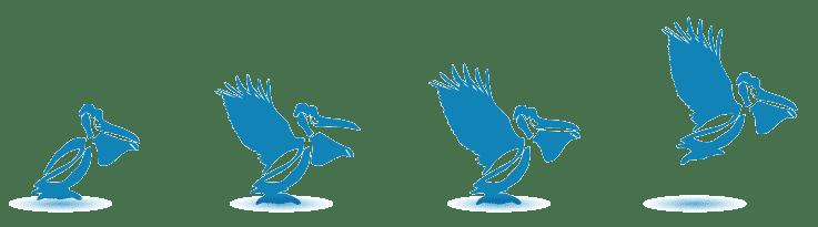 bandeau-Creizic-2016-bleu-pelicans